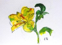 黄色い花。  カット   ペンに水彩