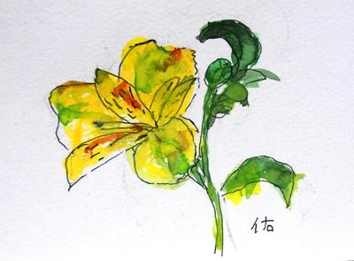 画像1: 黄色い花。  カット   ペンに水彩