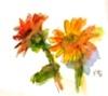 画像1: ガーベラ    カット   ペン に水彩