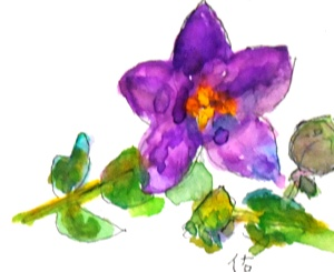 画像1: 桔梗  カット   ペンに水彩
